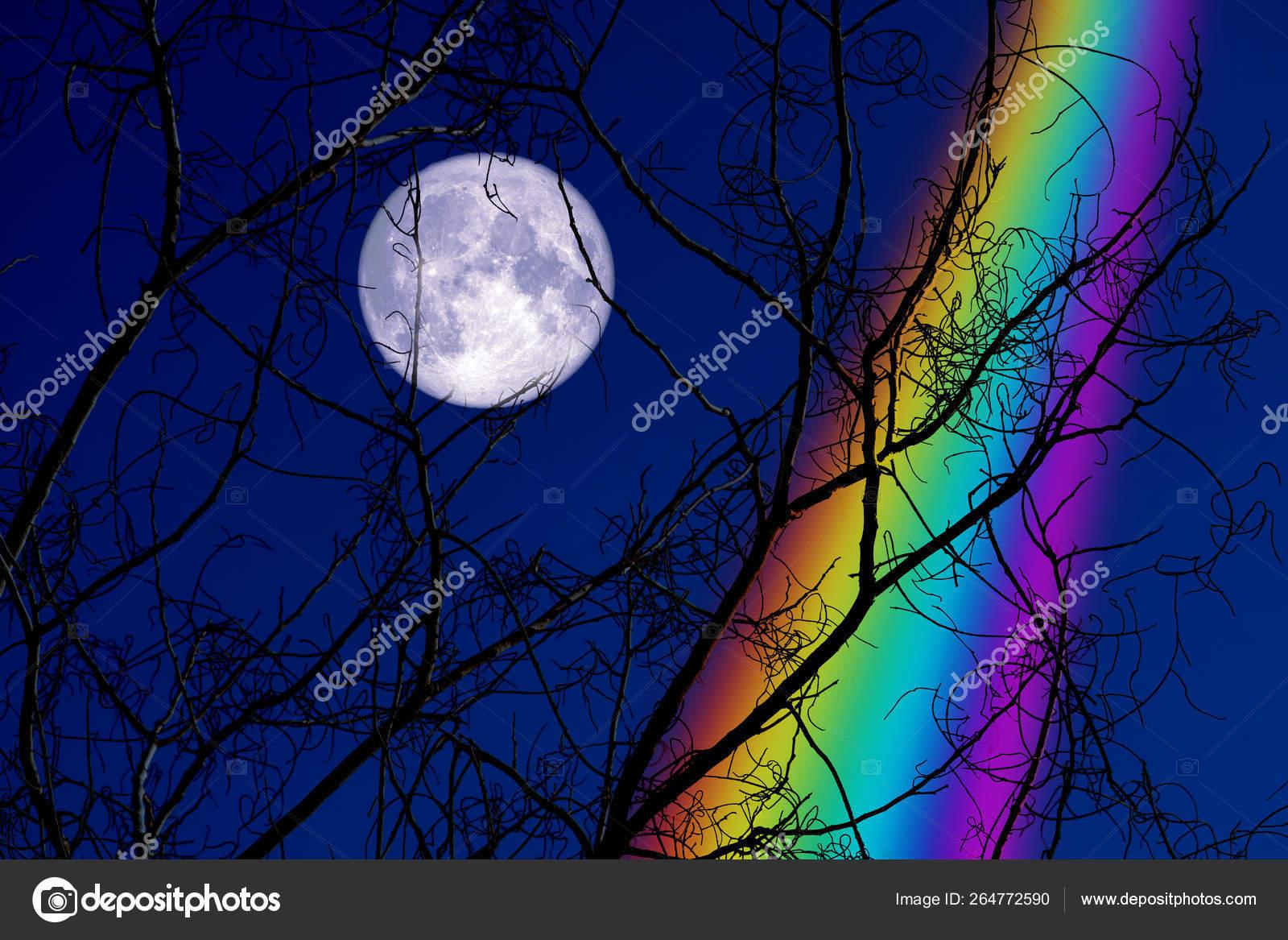 Full Buck Moon back on silhouette dry branch tree on night