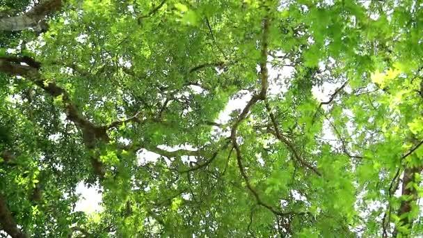 v létě pod čerstvými zelenými listy stromů v zahradě