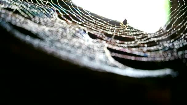 rozostření dešťové kapky na pavučinu a silueta pavouka Zkus třepat vodu na webu