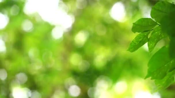 absztrakt zöld levelek elmosódott színes a napfény és a fa a kertben háttér