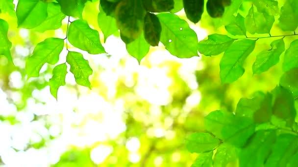zöld levelek elmosódott színes a napfény és a fa a kertben háttér