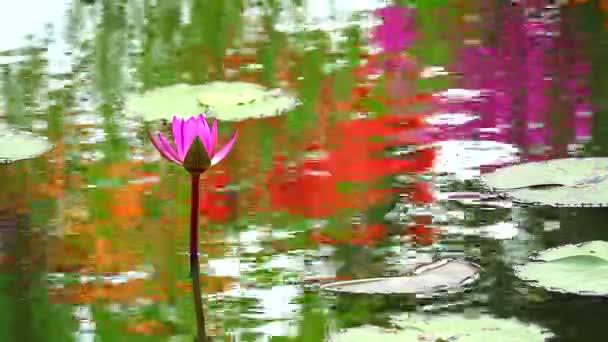 tükrözi a lótusz rózsaszín virág virágzik a tó és az eső esik levelek