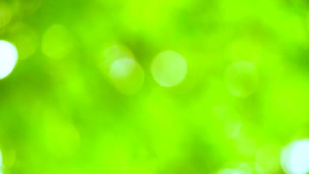 čistá zelená rozmazání pozadí abstrakce barevný listí květinová rostlina v zahradě