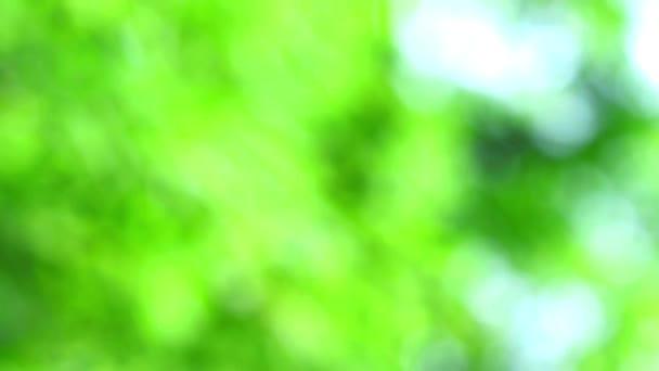 zelená světle modrá abstraktní rozostření barevný listí květinové stromy na zahradě