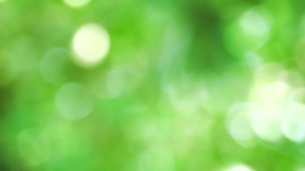 zelená bílá rozostření pozadí abstrakce barevný listí květinové stromy na zahradě