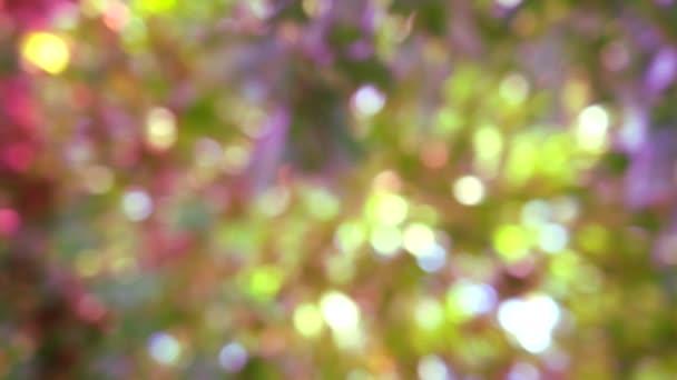 sárga rózsaszín lila fénysugár elmaszatol háttér absztrakt színes levelek virágfa a kertben