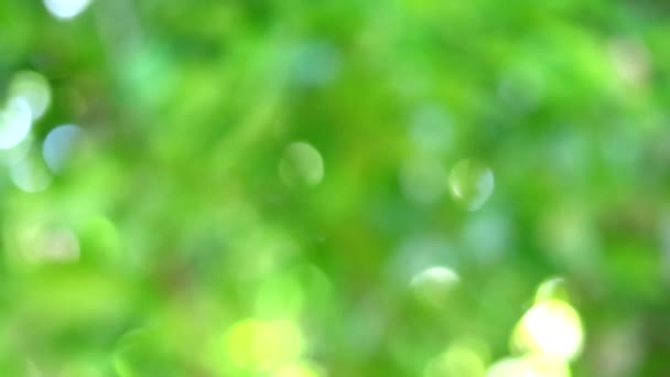 frisch grün verschwimmen Hintergrund abstrakt bunt Blätter Blume Baum im Garten