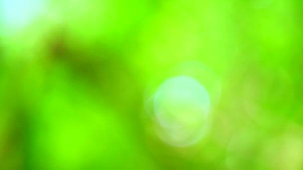 světle zelená rozostření pozadí abstrakt barevný listí květinové stromy na zahradě
