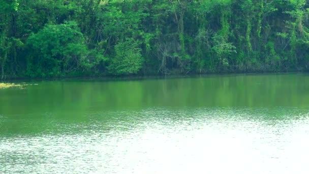 Jezero má vlnění na povrchu tmavě zelených stromů