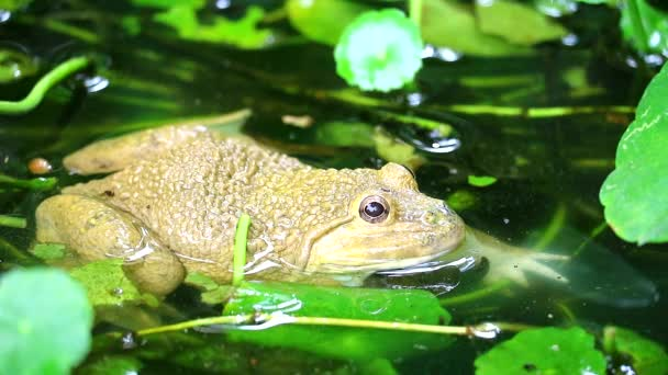Békák élnek távol a nap a vízben, és aktív a night1