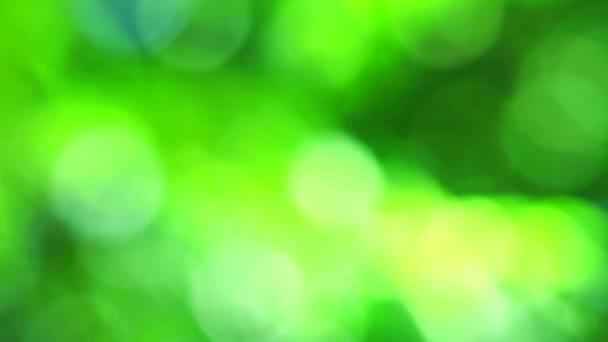 Zelená příroda abstraktní rozostření barevný listí květinové stromy na zahradě