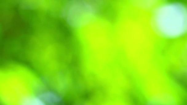 zöld természet absztrakt elmosás színes levelek virágfa garden1