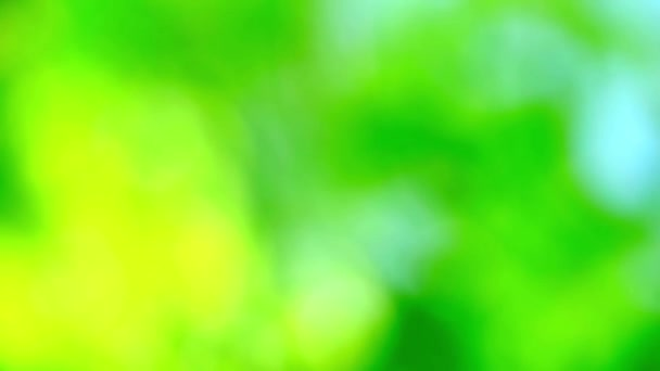 green abstract blur colorful leaves flower tree in garden2