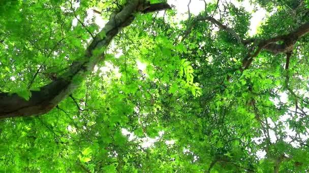 V tamarindu stromu jsou malé zelené listy, které rostou v zahradě a poskytují stín ptákům a dalším ANIMALS1