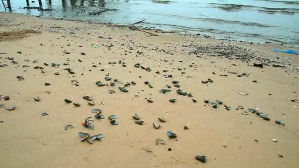 Muscheln sterben am Strand aufgrund steigender Meerestemperaturen aufgrund der globalen Erwärmung1