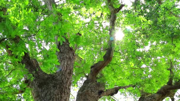 sunlight pass to tamarind tree has small green leaves that grow in the garden and provide shade for birds and other animals1