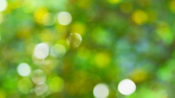 homályos zöld levelek a kertben1