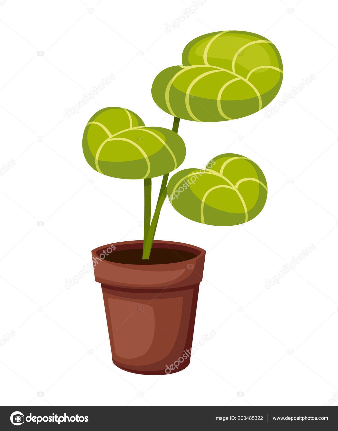 Plante Pot Jardin Paysager Interieur Exterieur Plante Pot