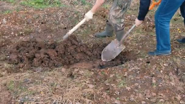 Two people in rubber boots dig the ground with shovels. Hands close-up. Spring work in the garden.