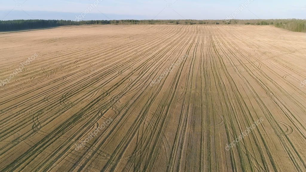 Flight above yellow field early spring, aerial panoramic view photo.