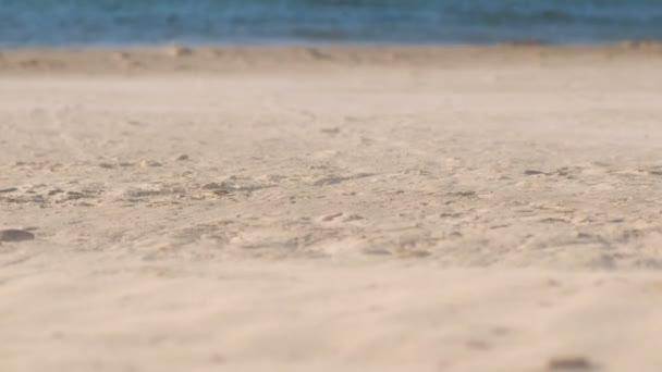 Písečná bouře a silný vítr na pláži u moře.