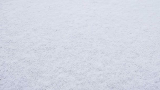 Textura čerstvý sníh pokrývající půdu hustě na mrazivý zimní ráno.