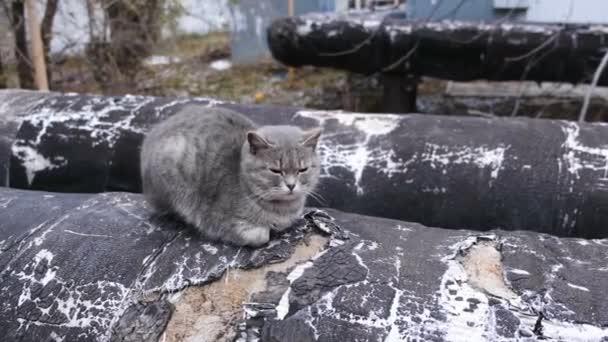 Heizen Hauptleitung auf der Straße. Graue Katze, sonnen sich in das warme Rohr.