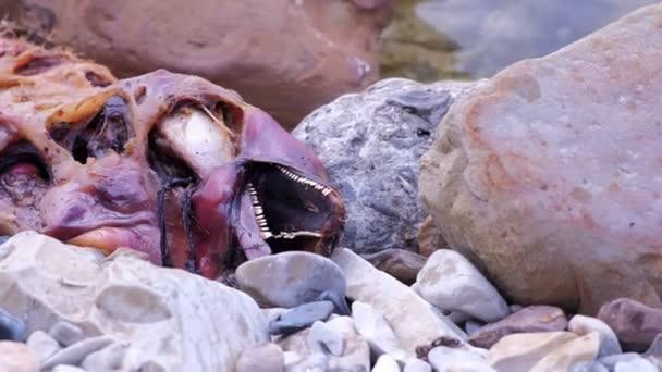Mrtvé rozkládající se tělo delfína na mořském pobřeží mezi skalami, šatní pohled.