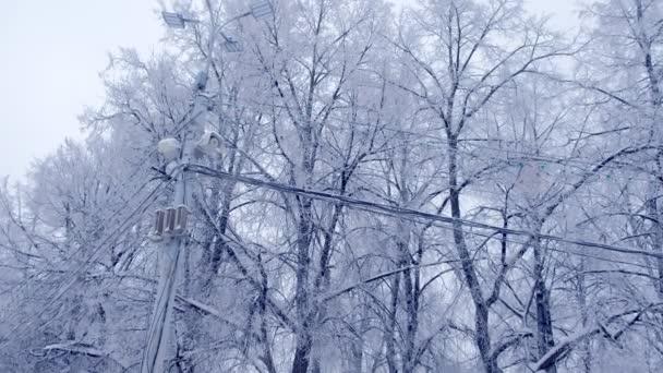 Straßenlaterne und Stromleitung vor dem Hintergrund schneebedeckter Bäume im Winter.