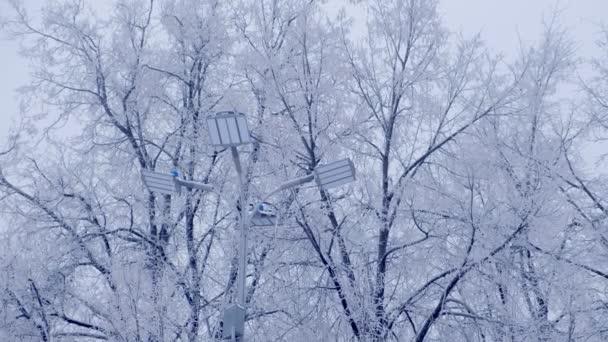 Uliční lampa lampa a napájecí vedení na pozadí zasněžené stromy v zimě.