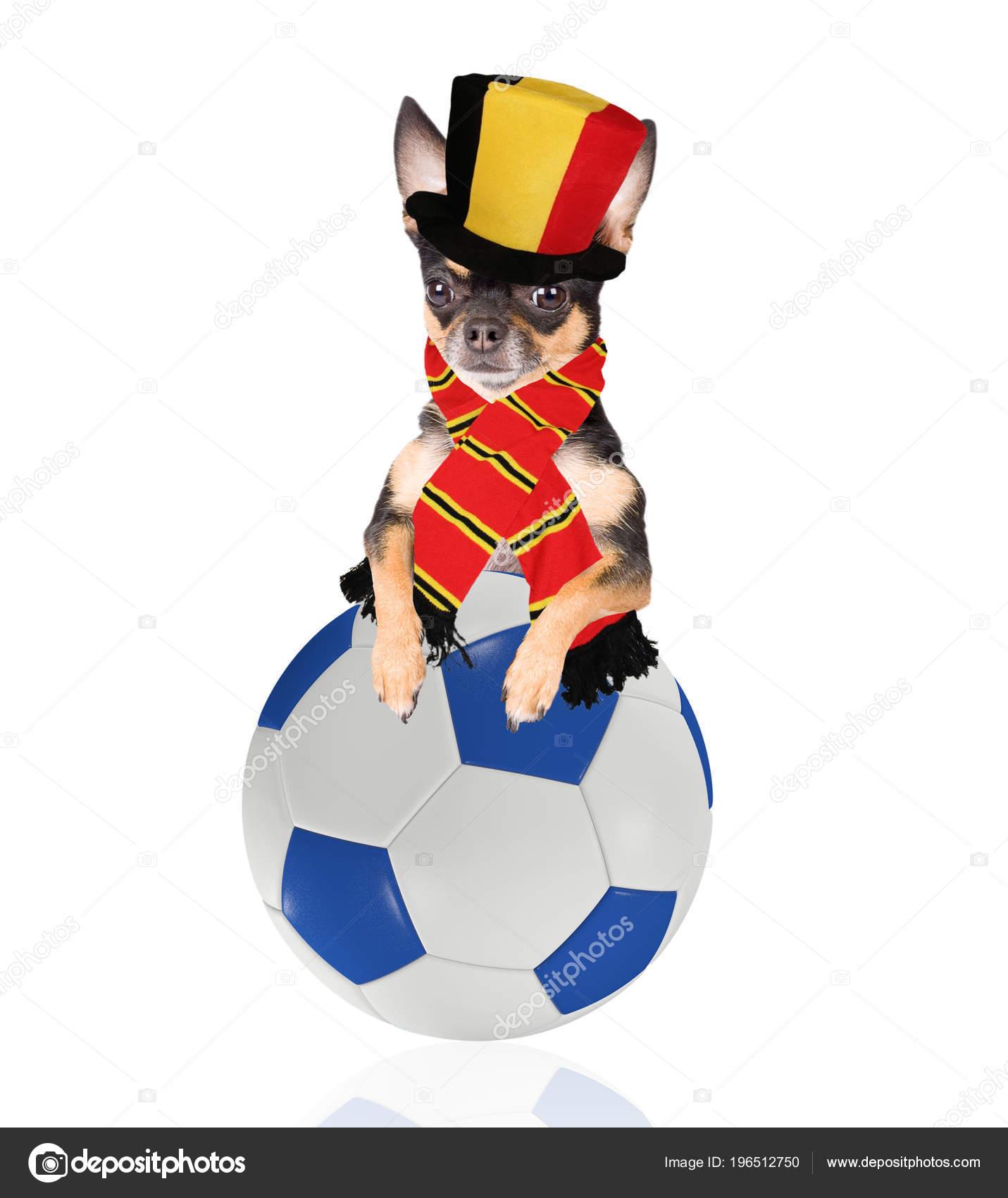 かわいい犬遊びのサッカー ボールとベルギーのチャンピオン — ストック