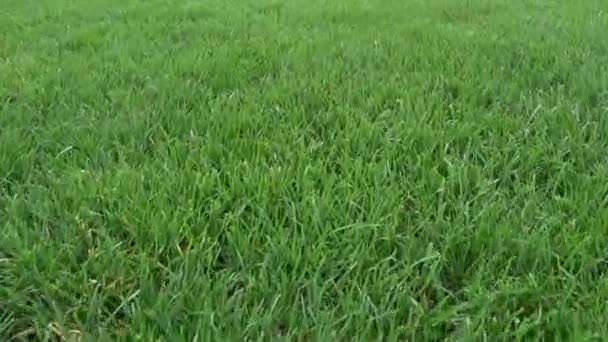A football lawn shot in motion
