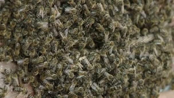 A méh raj a bejáratnál a kaptár. Méhészet