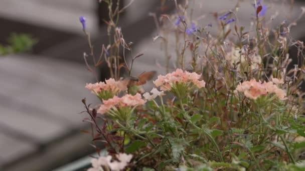 Kolibříci sbírají pyl ze síťoviny na letní den