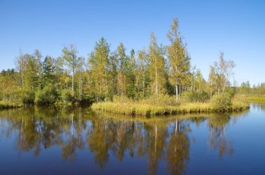 Autumn landscape with a river and birches on a Sunny day