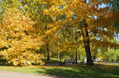 Golden autumn in the city Park