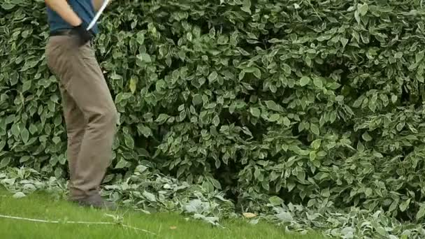 Gardener cleans cropped leaves with rake