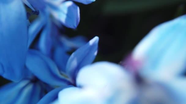 Blue flower in garden blow by the wind