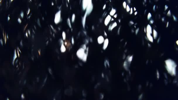 Strašidelný mimozemský les. Tmavá temná Spálená lesní krajina