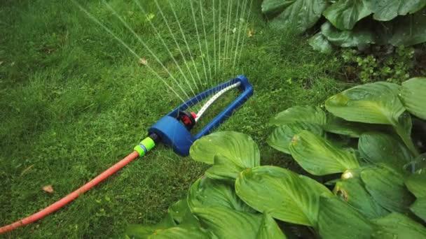 Rasensprenger speit Wasser über grünes Gras.