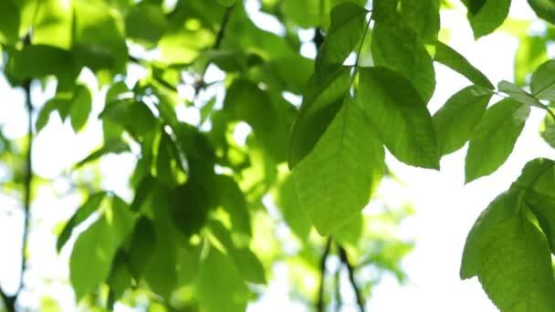 Listy houpačka ve větru, s odrazem z vody, ráno