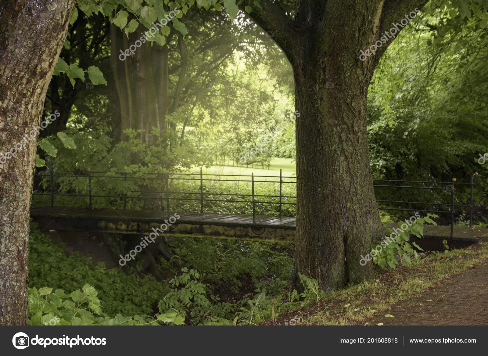 5f56e1f385 暖かい日差しと夏の緑豊かな公園で明るい夕日 — ストック写真 © brita ...