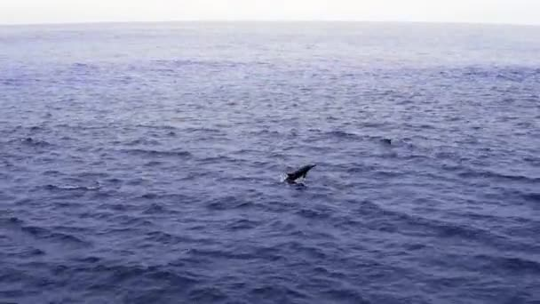 Group of dolphins in open ocean. View from boat