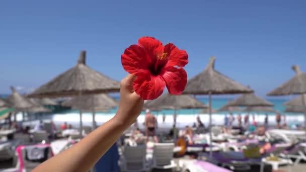 Ruka s červeným květem s mořem a sláma deštníky v pozadí