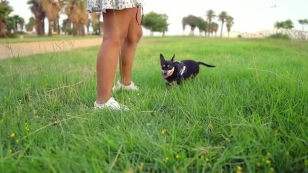 Malý pes jménem Artur s pánečkem relaxujícím na trávě