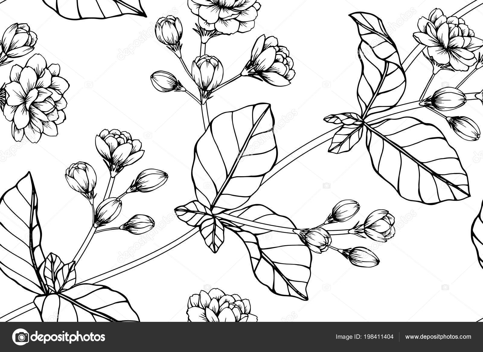 Seamless Jasmine Flower Pattern Background Black White Drawing Line ...