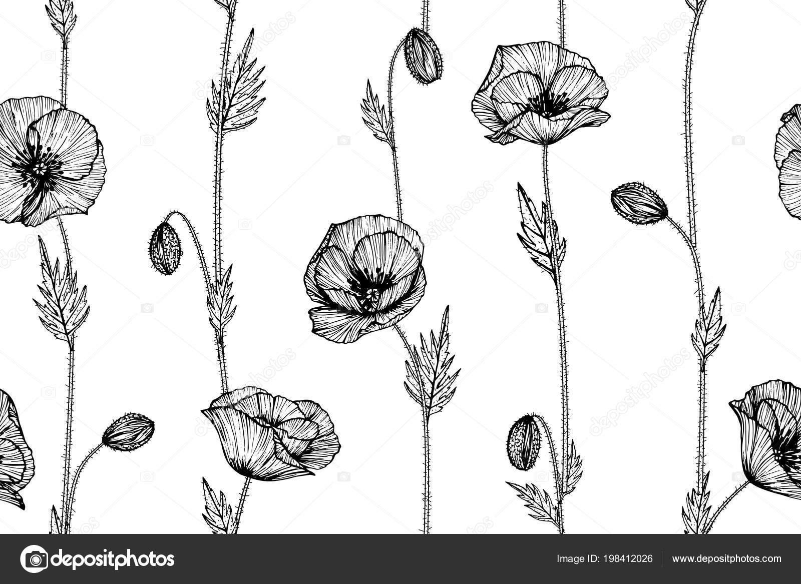 Seamless Poppy Flower Pattern Background Black White Drawing Line