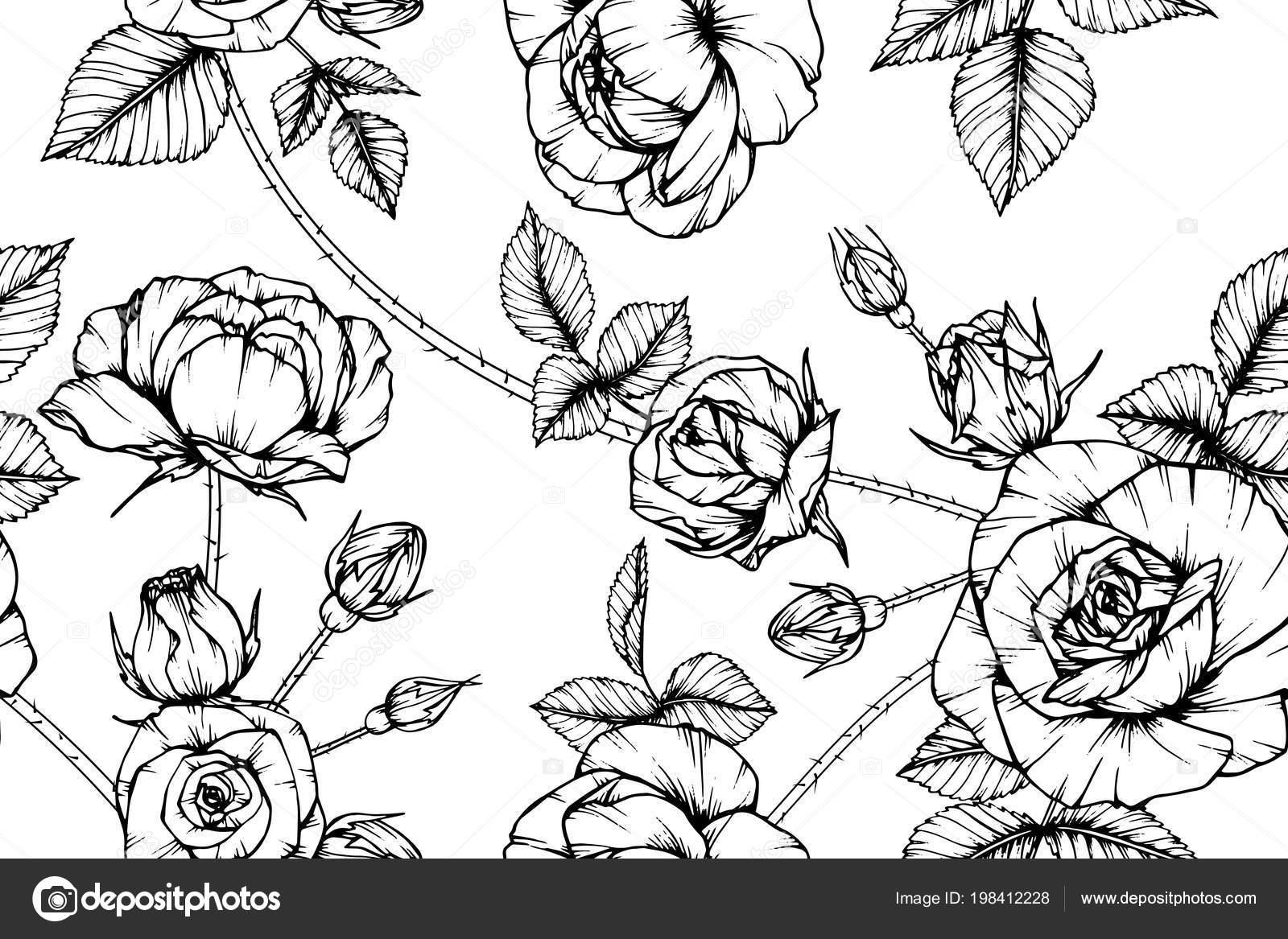 Sans Couture Rose Fleur Fond Noir Blanc Avec Dessin