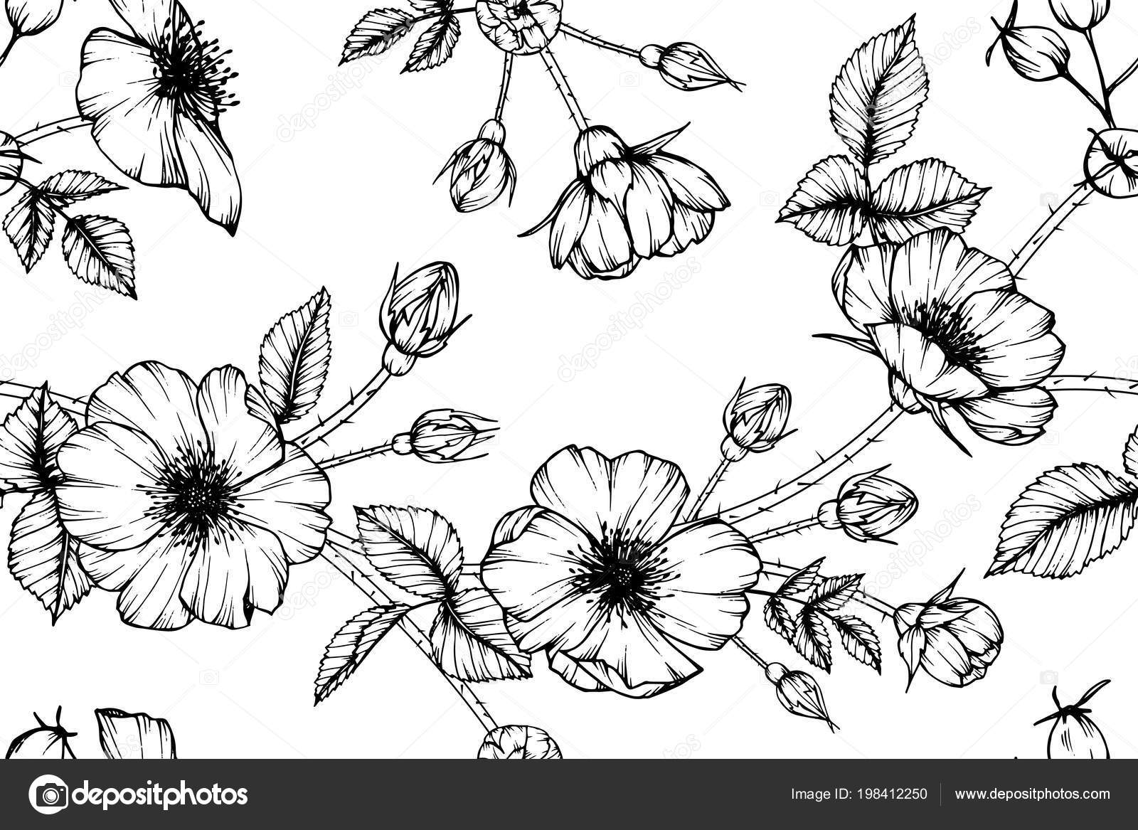 Seamless Dog Rose Flower Pattern Background Black White Drawing Line