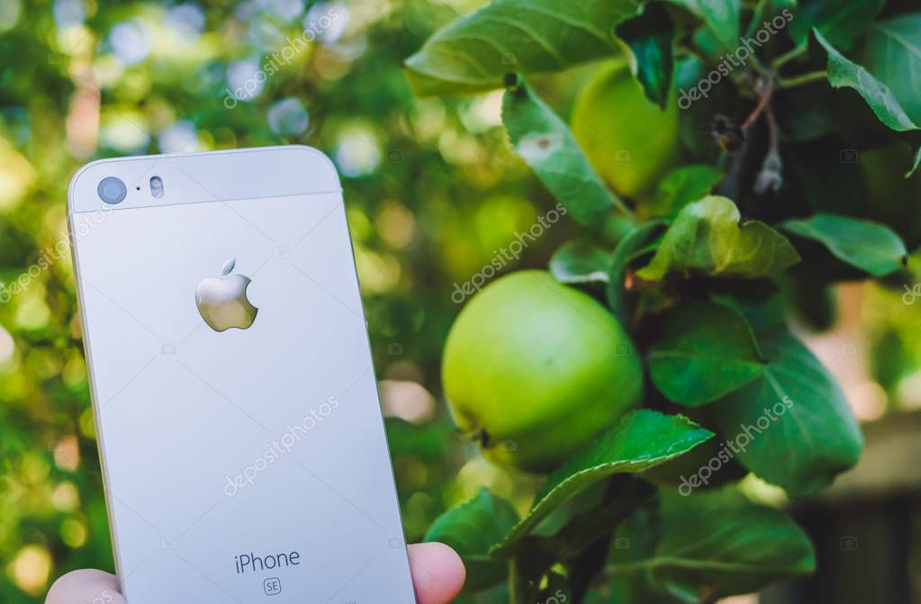 HALMSTAD, SWEDEN - AUGUST 9, 2018: concept image of womans hand holding new white or silver apple iphone SE near real apple tree with ripe fruits in the garden. Selective focus, blurred background